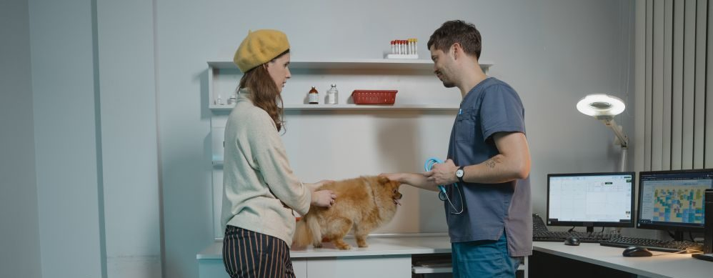 Get your pets medical history from vet