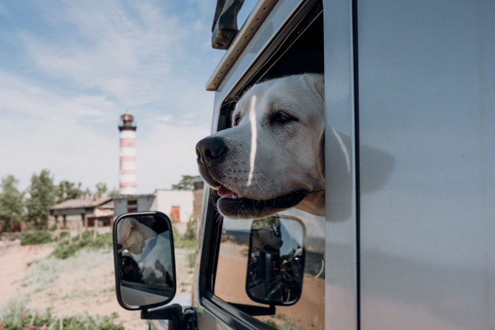 Pet Friendly RVs for Your Trip