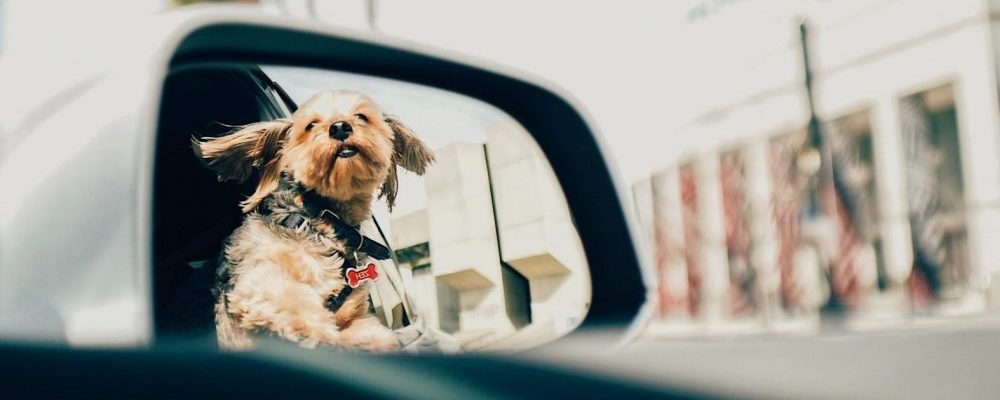 The Importance of protecting your pet falling out of the RV